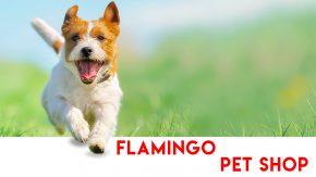 Flamingo Pet Shop