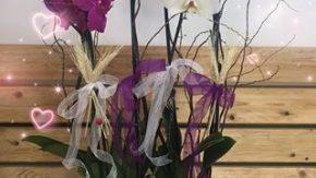 VIOLET ÇİÇEK ATÖLYESİ (Mihan Tutar) Çiçek Perakende ve Online Satışı